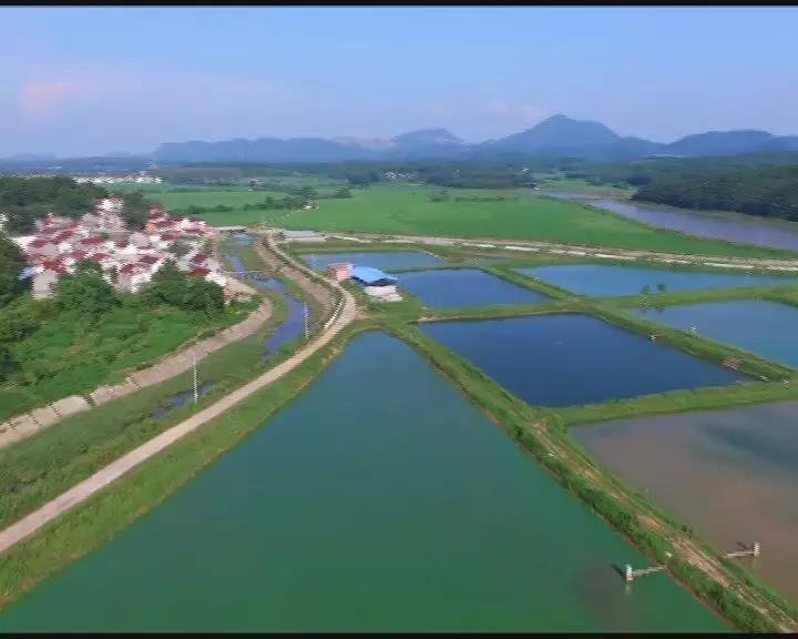 太湖县2019年农业发展综述