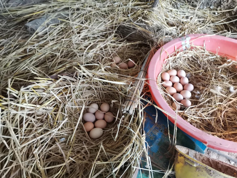 散养草鸡70元/只、 鸡蛋10元/斤13866612386