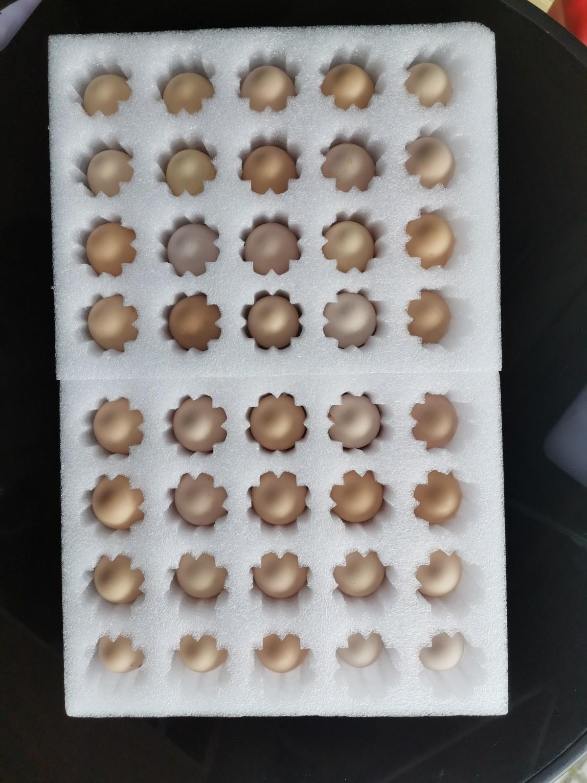 正宗散养草鸡、鸡蛋10元/斤,支持送货上门13866612386,外地包邮。
